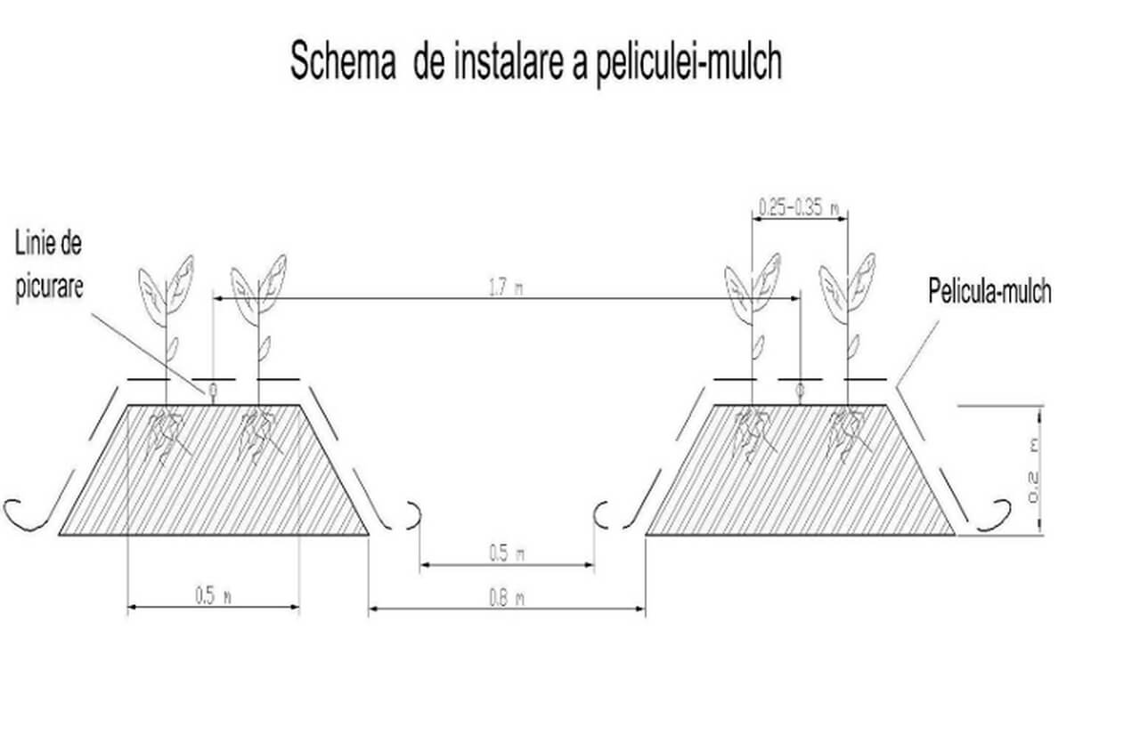 Schema de instalare a peliculei de mulch_Easy-Resize.com