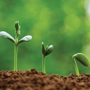 Stimulatori de creștere